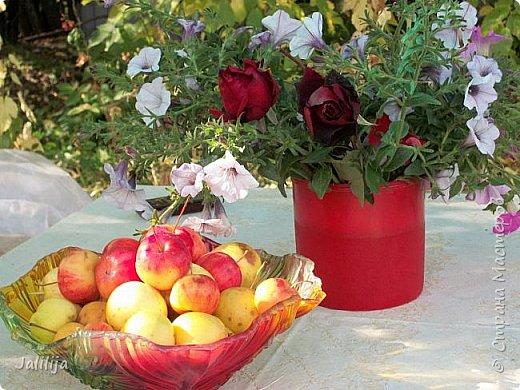 Здравствовать всем,. кто ко мне заглянул. К великому моему сожалению, летом я не занималась своим любимым джутом.  Летом я -садовник - огородник. Мои цветы, может, видели в записях моего блога. Сегодня хвастаюсь своим урожаем. фото 12