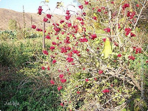 Здравствовать всем,. кто ко мне заглянул. К великому моему сожалению, летом я не занималась своим любимым джутом.  Летом я -садовник - огородник. Мои цветы, может, видели в записях моего блога. Сегодня хвастаюсь своим урожаем. фото 45