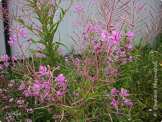 Здравствовать всем,. кто ко мне заглянул. К великому моему сожалению, летом я не занималась своим любимым джутом.  Летом я -садовник - огородник. Мои цветы, может, видели в записях моего блога. Сегодня хвастаюсь своим урожаем. фото 48