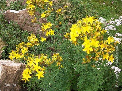 Здравствовать всем,. кто ко мне заглянул. К великому моему сожалению, летом я не занималась своим любимым джутом.  Летом я -садовник - огородник. Мои цветы, может, видели в записях моего блога. Сегодня хвастаюсь своим урожаем. фото 50