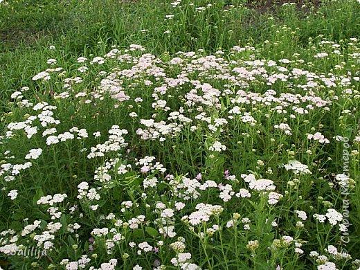 Здравствовать всем,. кто ко мне заглянул. К великому моему сожалению, летом я не занималась своим любимым джутом.  Летом я -садовник - огородник. Мои цветы, может, видели в записях моего блога. Сегодня хвастаюсь своим урожаем. фото 51