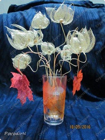 Скелетированные листья клена и физалиса. фото 3