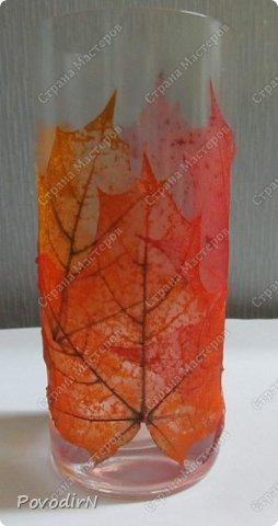 Скелетированные листья клена и физалиса. фото 6