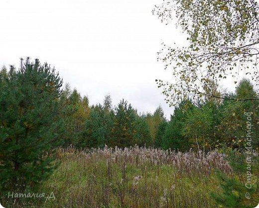 УРАААААА!!!! Я В ОТПУСКЕ!!! Всем доброго времени суток! СВЕРШИЛОСЬ!!!! Пришла осень и пришел отпуск! И я, хоть и понимала, что утро воскресенья - не самая лучшая пора для тихой охоты, да и прохладненько, но очень уж хотелось..... Да хоть бы и прогуляться по осеннему лесу. ну, собственно, так и получилось. Неет, чудок - на супчик и на жареху - собралось, конечно, но уже не стон, как неделю назад. И хочу Вам, уважаемые сограждане по стране Мастеров, предложить погулять со мной. фото 2