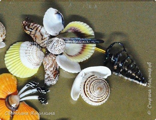 Доброго времени суток, дорогие жители СМ!  Панно из ракушек, размер 30х40 см, ракушки покрыты бесцветным лаком. фото 6