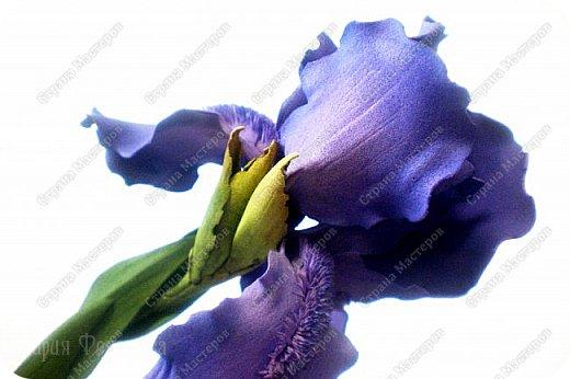 Добрый день,дорогие гости!Продолжаю осваивать так полюбившийся мной фоамиран. Сегодня у меня ирисы бородатые и розы на стебле.Цветы изготовлены для интерьерной композиции,чем буду еще дополнять букет - пока не знаю...размышляю.Вот он - мой красавчик!Такой хорошенький получился - аж пищу от удовольствия! Пока их три...хочу сделать еще несколько - другого цвета. Ирис бородатый изготовлен по МК чудесной мастерицы Марины Ченцовой. Фоамиран иранский.Тонировка масляной пастелью.... фото 2