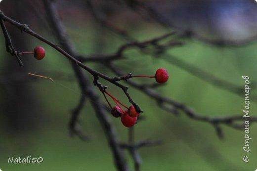 Доброго всем вечера!! За окном дождь..осень.. Захотелось поделиться своими осенними наблюдениями и стихи Елены Ольховик очень сюда подошли. фото 4