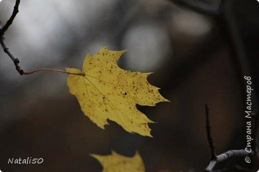 Доброго всем вечера!! За окном дождь..осень.. Захотелось поделиться своими осенними наблюдениями и стихи Елены Ольховик очень сюда подошли. фото 6