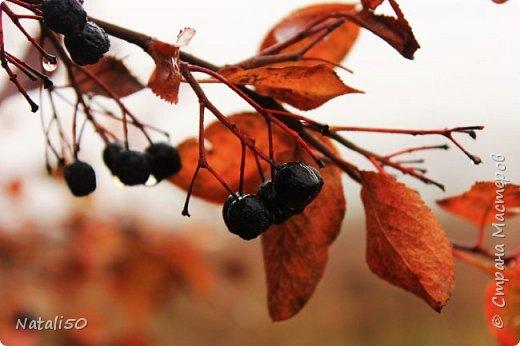 Доброго всем вечера!! За окном дождь..осень.. Захотелось поделиться своими осенними наблюдениями и стихи Елены Ольховик очень сюда подошли. фото 5
