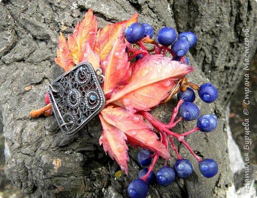"""Здравствуйте! Брошь """"Дикий виноград"""".  Моя новая работа из холодного фарфора.   Мастер-класс в обработке, будет в ближайшее время.  В мастер-классе покажу подробности лепки листьев, ягод винограда, а так же как красиво расписать масляными красками листья и ягоды. Покажу на какой клей я приклеиваю фурнитуру, чтоб она держалась надежно и качественно.   фото 2"""