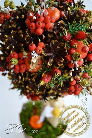 Осеннее дерево сделано на праздник осени в детский сад. Использовала природный материал (шишки, каштаны, рябина,шиповник, мох, кукурузные листья, различные сухие травинки.) акриловые краски, горячий клей. фото 2