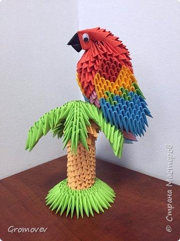 Попугай на пальме фото 1