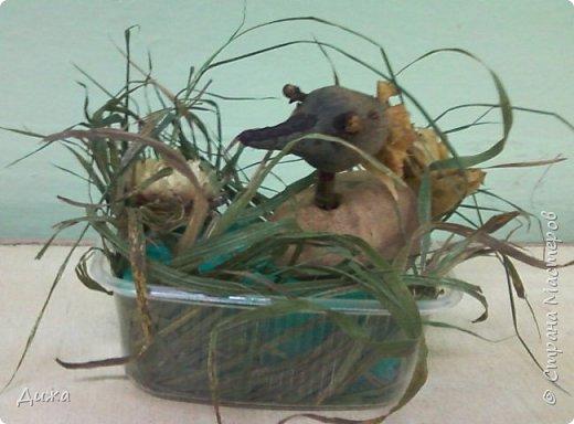 Всем огромный привет! Вот такая поделка была сделана для моего братика. У них в садике объявили конкурс поделок. Придумывать что-то более интересное не было времени, пришлось срочно импровизировать. Дома нашлась пластиковая мисочка. В дворе нарвали травы - это как будто бы камыши, воду сделала с помощью голубой губки для мытья посуды. Уточка сделана из картошки (туловище), голова (свекла), шея- из веточки, глаза - пряность гвоздика, хвост и хохолок на голове из сухих листьев.  фото 1