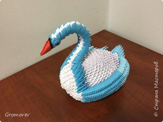 Лебедь фото 2