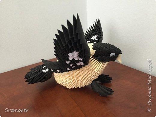 Птица фото 2