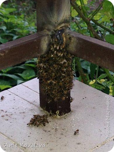 Поехали на дачу, а тут пчёлки:)) Днём летали, а к вечеру похолодало, и они впали почти в спячку:)) фото 3