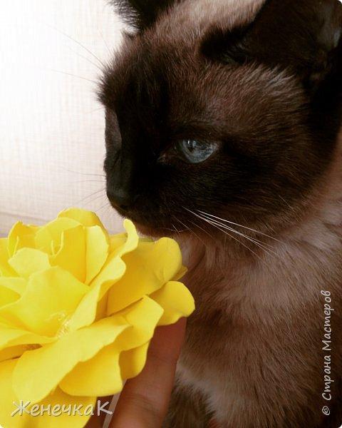 Ободочки девочкам для фотосессии. Ссылка на мк  по розам http://stranamasterov.ru/node/270854?c=favorite фото 12
