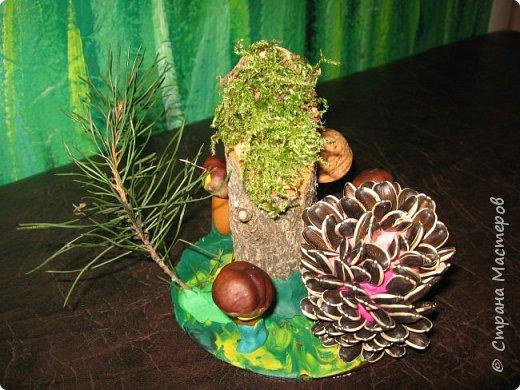 Осень, время поделок из природного материала...  Ёжик у пенька с грибами. В основе пенька пластиковый стаканчик от мороженого, и облеплен пластилином, мох; ёжик - киндер обмазан пластилином и украшен семенами подсолнечника; грибы (должны были быть опята, из палочек и шляпок от желудей, но в виду их отсутствия вышли другие грибочки) - березовые палочки, пластилин и скорлупа грецких орехов; в основании всей композиции диск компьютерный. фото 8
