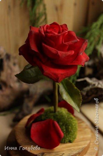 Продолжаю подготовку к фесту) Слепила вот такую розу из сказки. Получилась бархатистая розочка. После фестиваля отфоткаю процесс по тому,как достичь такого эффекта. фото 9