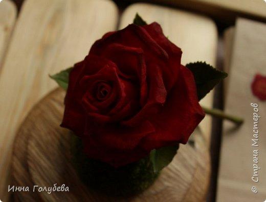 Продолжаю подготовку к фесту) Слепила вот такую розу из сказки. Получилась бархатистая розочка. После фестиваля отфоткаю процесс по тому,как достичь такого эффекта. фото 3