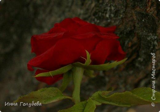 Продолжаю подготовку к фесту) Слепила вот такую розу из сказки. Получилась бархатистая розочка. После фестиваля отфоткаю процесс по тому,как достичь такого эффекта. фото 4