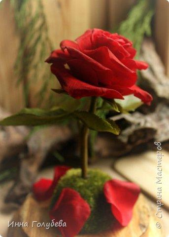 Продолжаю подготовку к фесту) Слепила вот такую розу из сказки. Получилась бархатистая розочка. После фестиваля отфоткаю процесс по тому,как достичь такого эффекта. фото 2