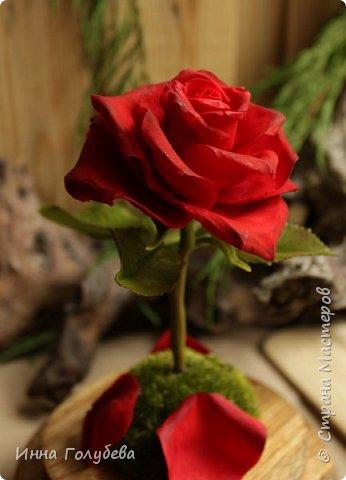Продолжаю подготовку к фесту) Слепила вот такую розу из сказки. Получилась бархатистая розочка. После фестиваля отфоткаю процесс по тому,как достичь такого эффекта. фото 1