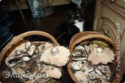 Для засолки нам понадобится: Грибы, соль 2 ст. л , чеснок 2 головки, петрушка- пучек, корень хрена . Для отваривания грибов кастрюли и  для гнета - я использую 5-ти литровую банку воды. фото 2