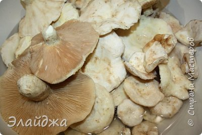 Для засолки нам понадобится: Грибы, соль 2 ст. л , чеснок 2 головки, петрушка- пучек, корень хрена . Для отваривания грибов кастрюли и  для гнета - я использую 5-ти литровую банку воды. фото 3