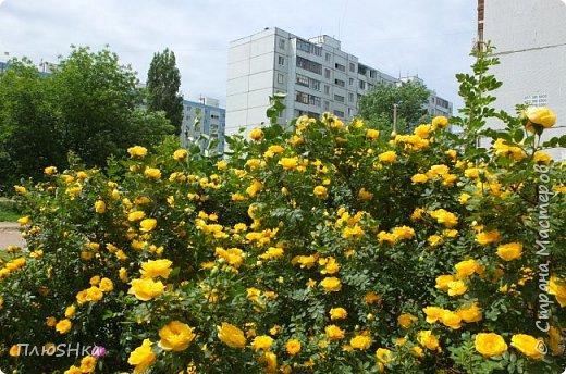 Доброго времени суток, уважаемые и любимые мои жители Страны Мастеров!  Погода за окном не самая приятная, разгулялись ОРВИ и грипп, а я хочу поднять вам настроение серией солнечных и летних фотографий, сделанных мной на душевной велопрогулке 31 мая 2016 года.  Очень хочется, чтобы мой фоторепортаж подарил вам немного радости, летнего тепла и солнышка! Поехали! фото 13