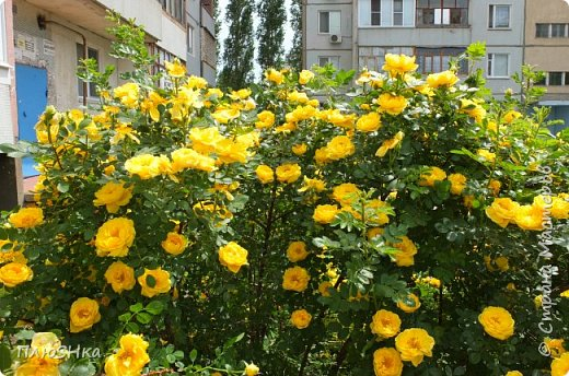 Доброго времени суток, уважаемые и любимые мои жители Страны Мастеров!  Погода за окном не самая приятная, разгулялись ОРВИ и грипп, а я хочу поднять вам настроение серией солнечных и летних фотографий, сделанных мной на душевной велопрогулке 31 мая 2016 года.  Очень хочется, чтобы мой фоторепортаж подарил вам немного радости, летнего тепла и солнышка! Поехали! фото 14