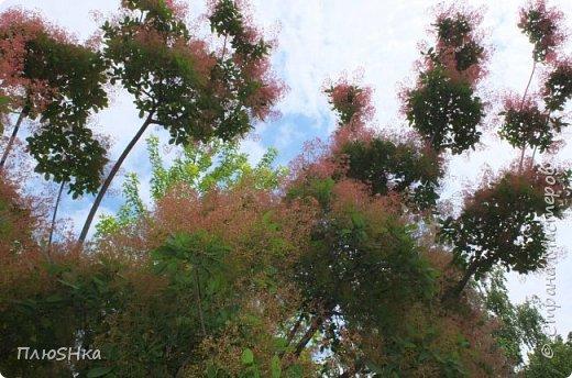 Доброго времени суток, уважаемые и любимые мои жители Страны Мастеров!  Погода за окном не самая приятная, разгулялись ОРВИ и грипп, а я хочу поднять вам настроение серией солнечных и летних фотографий, сделанных мной на душевной велопрогулке 31 мая 2016 года.  Очень хочется, чтобы мой фоторепортаж подарил вам немного радости, летнего тепла и солнышка! Поехали! фото 30