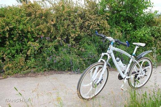 Доброго времени суток, уважаемые и любимые мои жители Страны Мастеров!  Погода за окном не самая приятная, разгулялись ОРВИ и грипп, а я хочу поднять вам настроение серией солнечных и летних фотографий, сделанных мной на душевной велопрогулке 31 мая 2016 года.  Очень хочется, чтобы мой фоторепортаж подарил вам немного радости, летнего тепла и солнышка! Поехали! фото 3