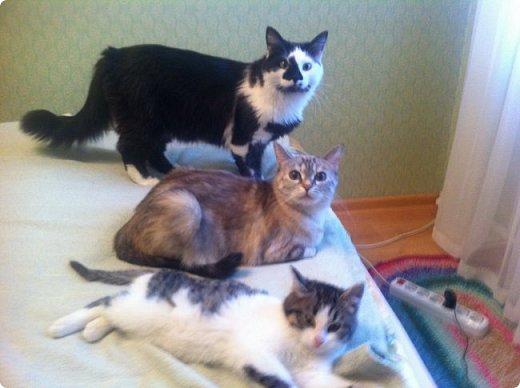 Всем привет!!!! Знакомьтесь, мои кошки. Тося, Степа, Вася, Тиша. фото 1