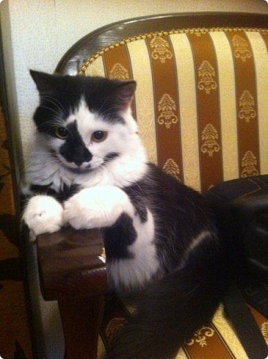 Всем привет!!!! Знакомьтесь, мои кошки. Тося, Степа, Вася, Тиша. фото 3