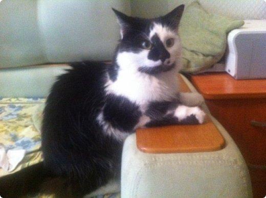 Всем привет!!!! Знакомьтесь, мои кошки. Тося, Степа, Вася, Тиша. фото 13