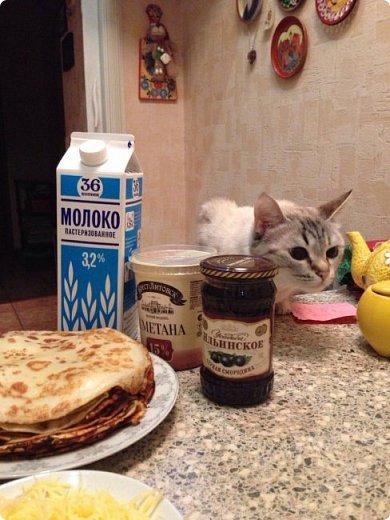 Всем привет!!!! Знакомьтесь, мои кошки. Тося, Степа, Вася, Тиша. фото 19