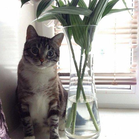 Всем привет!!!! Знакомьтесь, мои кошки. Тося, Степа, Вася, Тиша. фото 20