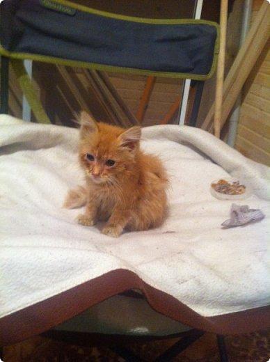 Всем привет!!!! Знакомьтесь, мои кошки. Тося, Степа, Вася, Тиша. фото 4