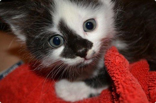 Всем привет!!!! Знакомьтесь, мои кошки. Тося, Степа, Вася, Тиша. фото 23