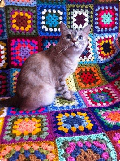 Всем привет!!!! Знакомьтесь, мои кошки. Тося, Степа, Вася, Тиша. фото 24