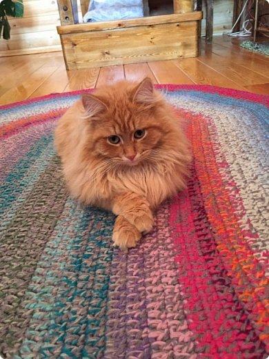 Всем привет!!!! Знакомьтесь, мои кошки. Тося, Степа, Вася, Тиша. фото 5
