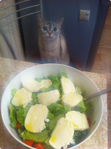 Всем привет!!!! Знакомьтесь, мои кошки. Тося, Степа, Вася, Тиша. фото 25