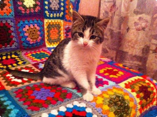 Всем привет!!!! Знакомьтесь, мои кошки. Тося, Степа, Вася, Тиша. фото 6