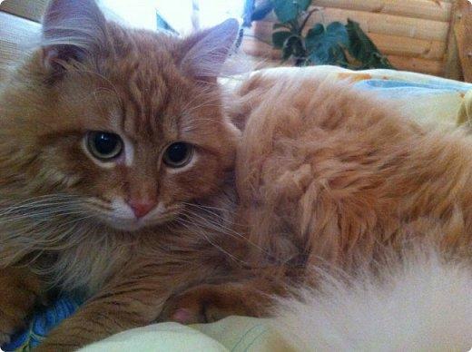 Всем привет!!!! Знакомьтесь, мои кошки. Тося, Степа, Вася, Тиша. фото 26