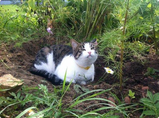 Всем привет!!!! Знакомьтесь, мои кошки. Тося, Степа, Вася, Тиша. фото 7