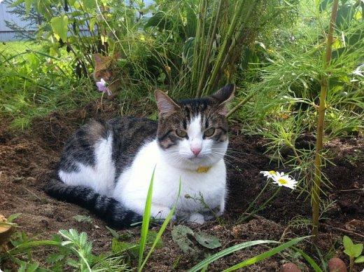 Всем привет!!!! Знакомьтесь, мои кошки. Тося, Степа, Вася, Тиша. фото 8