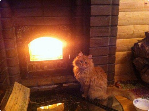 Всем привет!!!! Знакомьтесь, мои кошки. Тося, Степа, Вася, Тиша. фото 9