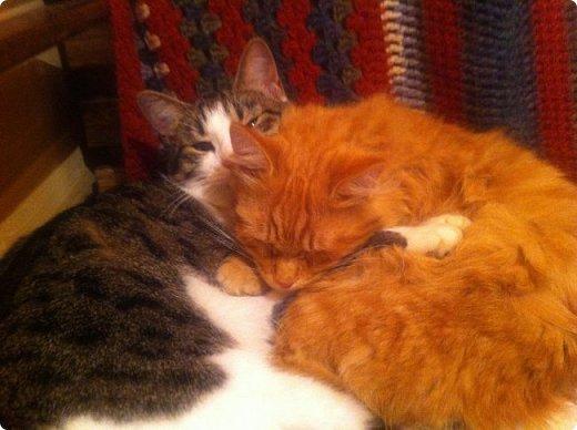 Всем привет!!!! Знакомьтесь, мои кошки. Тося, Степа, Вася, Тиша. фото 10