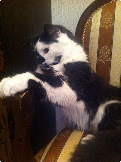 Всем привет!!!! Знакомьтесь, мои кошки. Тося, Степа, Вася, Тиша. фото 11